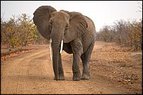 Click image for larger version.  Name:Angry Elephant Cow.jpg Views:120 Size:272.3 KB ID:558874
