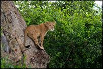 Click image for larger version.  Name:Tree Climbers.jpg Views:21 Size:951.7 KB ID:554856